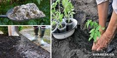 Πως να Χρησιμοποιήστε τη Στάχτη στον Κήπο! Όλα τα Μυστικά που Πρέπει να Ξέρετε! #χρήσιμα