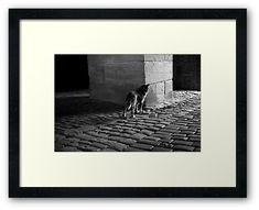 #photography #photo #art #print #artprint #streetphotography #streetphoto #bw #blackandwhite #dogs #pets #doggie #street #frame #framedprint #findyourthing #photographs #artforsale #wallart #prague #czechia #czechrepublic #animals