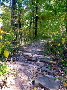 Ruffner Mountain Walking Path