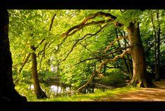 Dans les bois jpg
