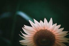 Untitled   Flickr - Photo Sharing!