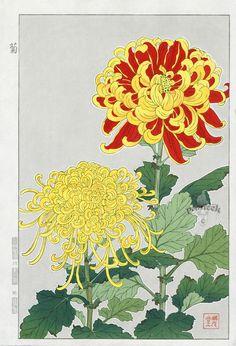 Red & Yellow Chrysanthemum | Shodo Kawarazaki | Chrysanthemum / Mum Flower / Chrysanth | #Japanese #Art #Flowers