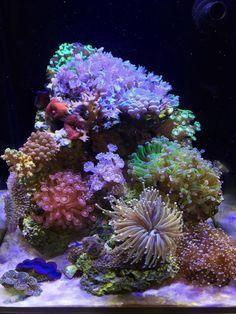 Saltwater Aquarium Setup, Coral Reef Aquarium, Saltwater Fish Tanks, Aquarium Design, Marine Aquarium, Aquarium Fish Tank, Aquarium Ideas, Nano Reef Tank, Reef Tanks