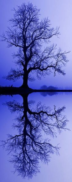"""Tree Skeleton Reflection by David Pringle. """"The original photograph of the tree skeleton was taken on a foggy morning in Northumberland. The image has been enhanced using a Flood effect filter to create the reflection."""""""