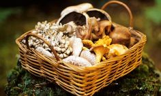 A basket of assorted wild mushrooms. Photograph: StockFood/Getty Images