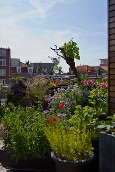 Our roofgarden by ConnyvdHvL - proof that you don't need a huge outdoor space to create #homesfornature!