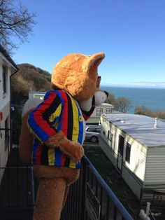 Freddy checking out the amazing views from Sandaway Beach Holiday Park, #Devon. http://www.johnfowlerholidays.com/devon-holiday-park/sandaway-beach-holiday-park