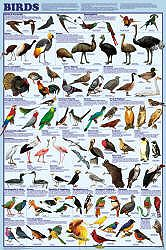 Bird Orders Posters