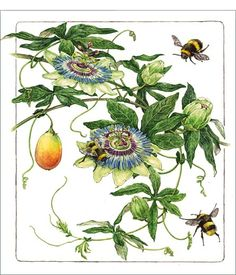 Passionflowers (Passiflora caerulea) and Bubble bees (Bombus) - Watercolor on paper  by Asuka Hishiki