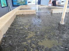 Turtle Farm: Located on the southern part of the island, and supported by Mexican government and private funds, at Isla Mujeres turtle farm you will learn about preservation and will admire turtles in different stages of development.
