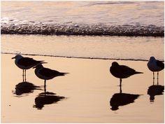Gulls' salute to the morning - Santa Teresita - Buenos Aires - Argentina