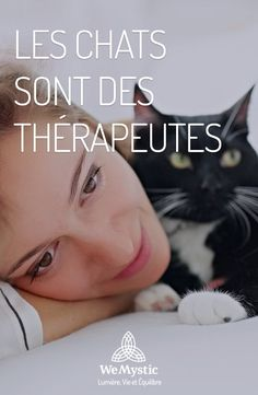 Les chats sont des thérapeutes - Sylvia B. Cat Lady, Improve Yourself, Dog Cat, Cats, Daily Journal, Paranormal, Feng Shui, Reiki, Tarot