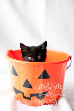 This is Gremlin. The first gorgeous black kitten in my series Back in Black. I am hoping to raise awareness at my local animal shelter about the plight of black pets. Help put an end to Black Dog Syndrome.