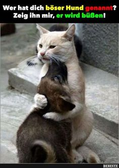 Como perros y Gatos, aqu fallo la equacion Like dogs and cats, equation fail Animals And Pets, Baby Animals, Funny Animals, Cute Animals, Funniest Animals, Animal Fun, Cute Kittens, Cats And Kittens, I Love Cats