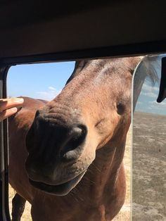 Someone wanted to come for a ride with us. This friendly fella lives among the game animals at one of our survey sites and is great friends with the resident zebra herds. He has retired and is living out his days eating grass and getting pats from visitors! #CapeTownVolunteer #CTRCI