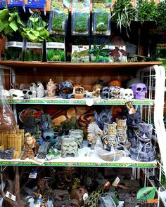 Show your creativity through your pets home! 🦎🐍🐢 Make it look good and cozy for your reptiles! Visit our online boutique or come see us in store to find the perfect accessories and decor! 😎 #MagazooReptiles Reptile Shop, Witch Shop, Reptile Accessories, Pet Home, Come And See, House In The Woods, Reptiles, Creativity, Cozy