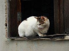 Gato - Chapada Diamantina - Bahia - Brasil (por Soraya Belli)