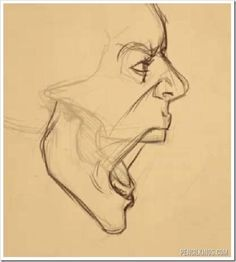 side view of face drawing open mouth - angry, yell Drawing Heads, Body Drawing, Anatomy Drawing, Figure Drawing, Drawing Reference, Face Side View Drawing, Man Face Drawing, Drawings Of Faces, Face Profile Drawing