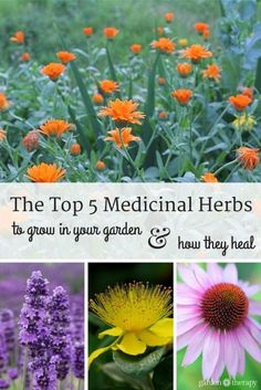 Grow these medicinal herbs in your flower garden - they are beautiful and have amazing healing properties too.