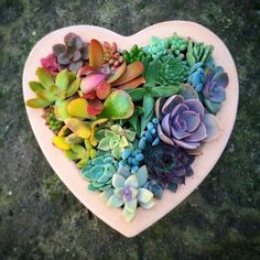 Stunning Beauty Succulents for Houseplant Indoor Decorations Growing Succulents, Cacti And Succulents, Planting Succulents, Planting Flowers, Succulent Gardening, Succulent Terrarium, Terrariums, Organic Gardening, Indoor Gardening
