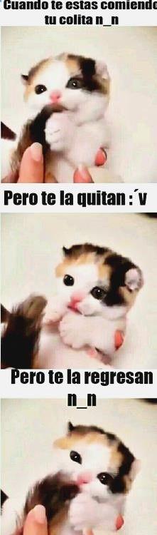 ^o^ Encuentra lo mejor en memes en español friki, chistes buenos mp, chistes para niños de tercero, chistes para niños reyes magos y imagenes de risa en el trabajo. ➫➫➫ http://www.diverint.com/memes-divertidos-espanol-obligan-algun-lado/