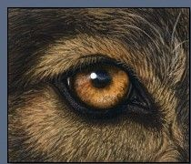 how to paint realistic dog eye Painting Fur, Painting & Drawing, Painting Tips, Animal Paintings, Animal Drawings, Realistic Drawings, Eye Drawings, Pencil Drawings, Pencil Drawing Tutorials
