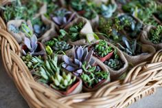 #succulents Photography by susanhudsonphotography.com  Read more - http://www.stylemepretty.com/2012/11/07/backyard-alabama-wedding-from-susan-hudson-photography/