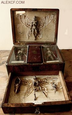 A very creepy DIY for a cabinet or antique lap desk of curiousities! Perfect for the front hallway or foyer for the Halloween party! Cabinet Of Curiosities, Assemblage Art, Weird And Wonderful, Mythical Creatures, Macabre, Wicca, Faeries, Shadow Box, Dark Art