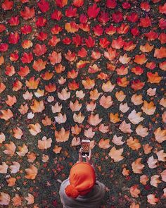 Herbst aesthetic cozy :::::::h u n g r y f o r b r a i n f o o d:::: Fall Inspiration, Travel Inspiration, All Nature, Autumn Photography, Beauty Photography, Fall Photos, Leaf Design, Fall Season, Autumn Leaves
