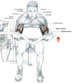 Bíceps en maquina