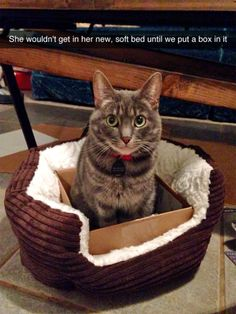 funny cat. bed and box