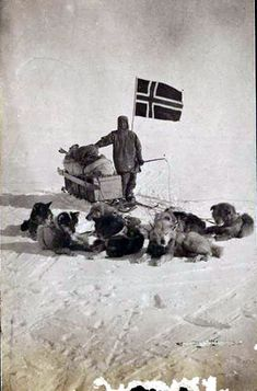 Amundsen near the Pole with his dog team