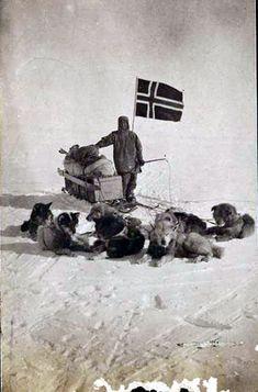 Amundsen near the Pole with his dog team