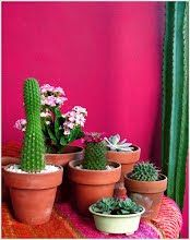 potted cactus collection
