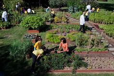 First Lady Michelle Obama and White House Chefs join children from Bancroft and Tubman Elementary Schools to harvest vegetables during the third annual White House Kitchen Garden fall harvest on the South Lawn, Oct. 5, 2011. (Official White House Photo by Chuck Kennedy)