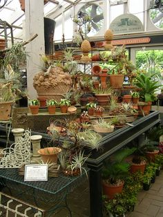 paradis express: Ailsa in Southland Nursery. Showing off both pottery and succulents!