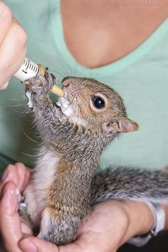 http://postris.com/list/442/15-Photos-Of-Animals-Eating-Guaranteed-To-Make-Your-Day/