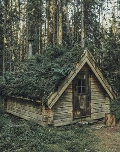 Little cabin with green roof in the woods, c. Tiny Cabins, Cabins And Cottages, Little Cabin, Little Houses, Tiny Houses, Forest Cabin, Cabin In The Woods, Living Roofs, Rustic Cottage