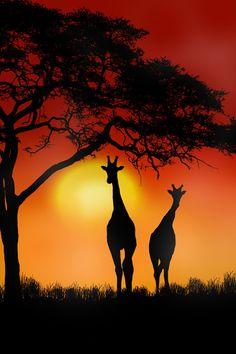 Girafas - Animal -> Por: Angel Catalán Rocher! CLICK -> pinterest.com/AngelCatalan20/boards/ <- Sígueme!