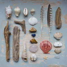 a natural curiosities collection. a reminder of childhood and the best of the victorians, all in one image~