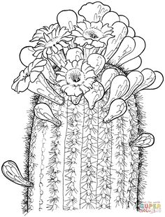 saguaro cactus blossom coloring page from cactus category