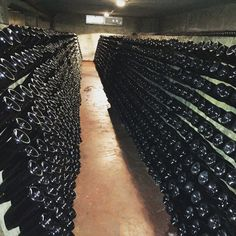LINI910 Lambrusco Metodo Classico aging cellar in Corregio Italy