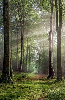 Robert Wolstenholme - Buckholt Wood, Cranham, Gloucestershire, England
