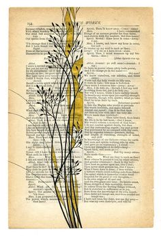 beautiful illustrations on book pages by Paul Desmond