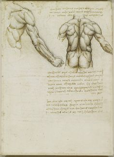 The muscles of the back and arm. Leonardo da Vinci (Vinci 1452-Amboise 1519) #TuscanyAgriturismoGiratola