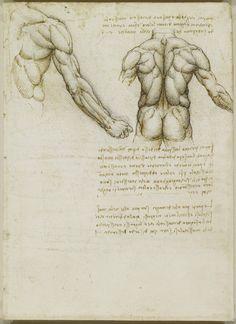 The muscles of the back and arm. Leonardo da Vinci (Vinci 1452-Amboise 1519) #TuscanyAgriturismoGiratola