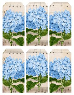 Blue hydrangeas - tea bags, tags, postcard, stationery, etc.