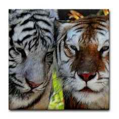 Bengal Tiger Friends Tile Coaster