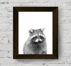 procione stampa boschiva fotografia animale manifesto