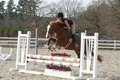 Cute hunter pony with JUMP! on Epona Exchange!